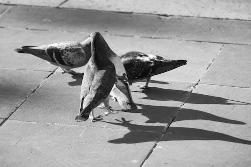Pigeons sitting on paved sidewalk