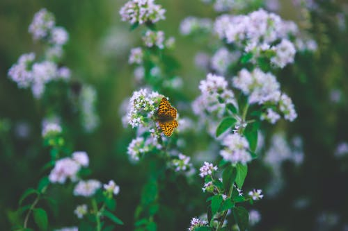 Základová fotografie zdarma na téma divoký, flóra, hřiště, květiny