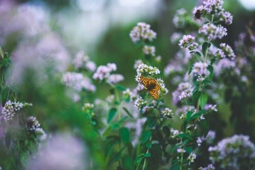 Gratis arkivbilde med blomster, sommerfugl