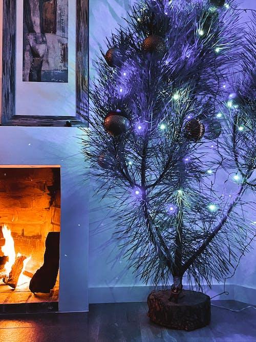 Kostnadsfri bild av julgran, mysigt hem, öppen spis