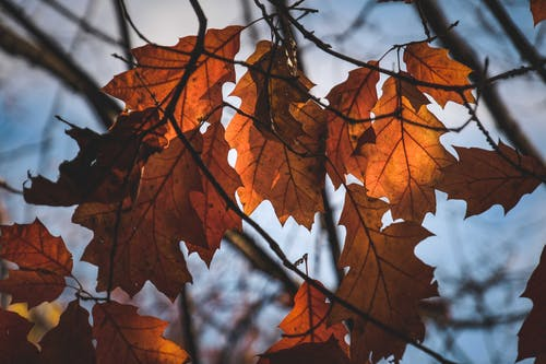 Dry leaves growing on tree branches