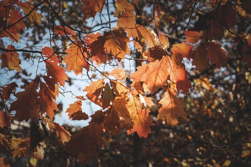 Autumn leaves growing in autumnal forest