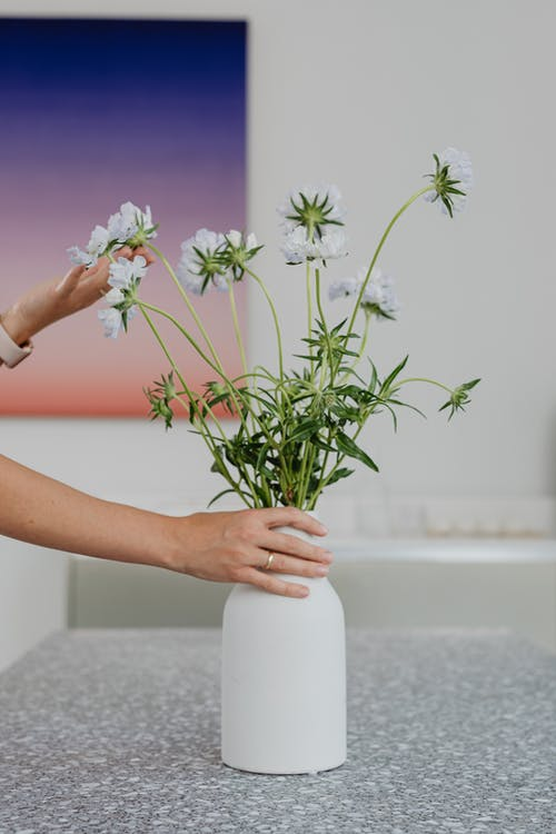 Бесплатное стоковое фото с Ароматерапия, в помещении, ваза, дзэн