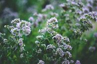 nature, flowers, garden