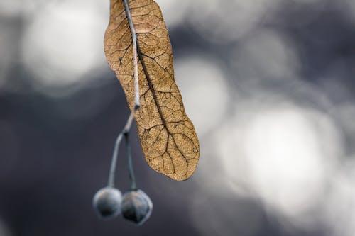 Základová fotografie zdarma na téma barva, bobule, botanický