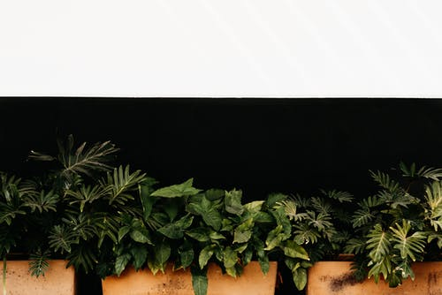 Green tropical plants with leaves of different shapes growing in orange pots against black background