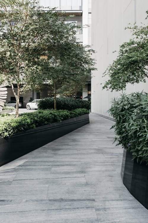 Paved pathway between green plants and trees in yard of modern residential building