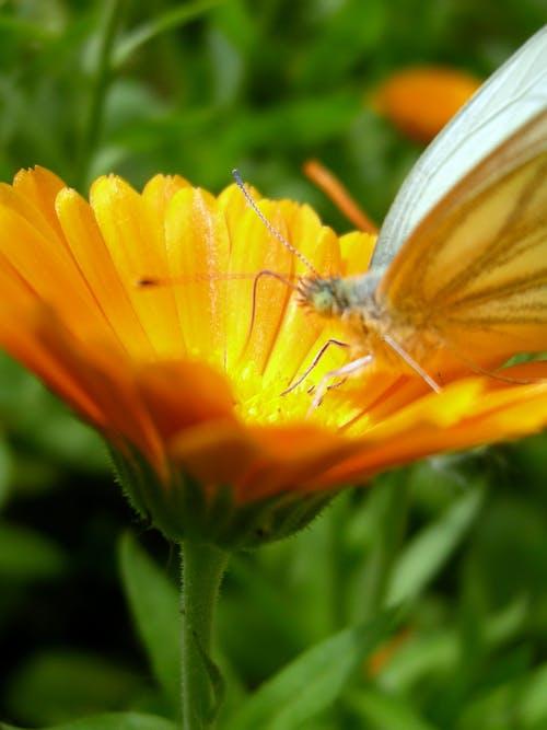 Photos gratuites de été, fleur, nature, orange