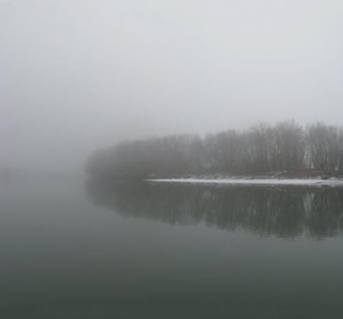 Photos gratuites de arbres, brouillard, brumeux, ciel couvert