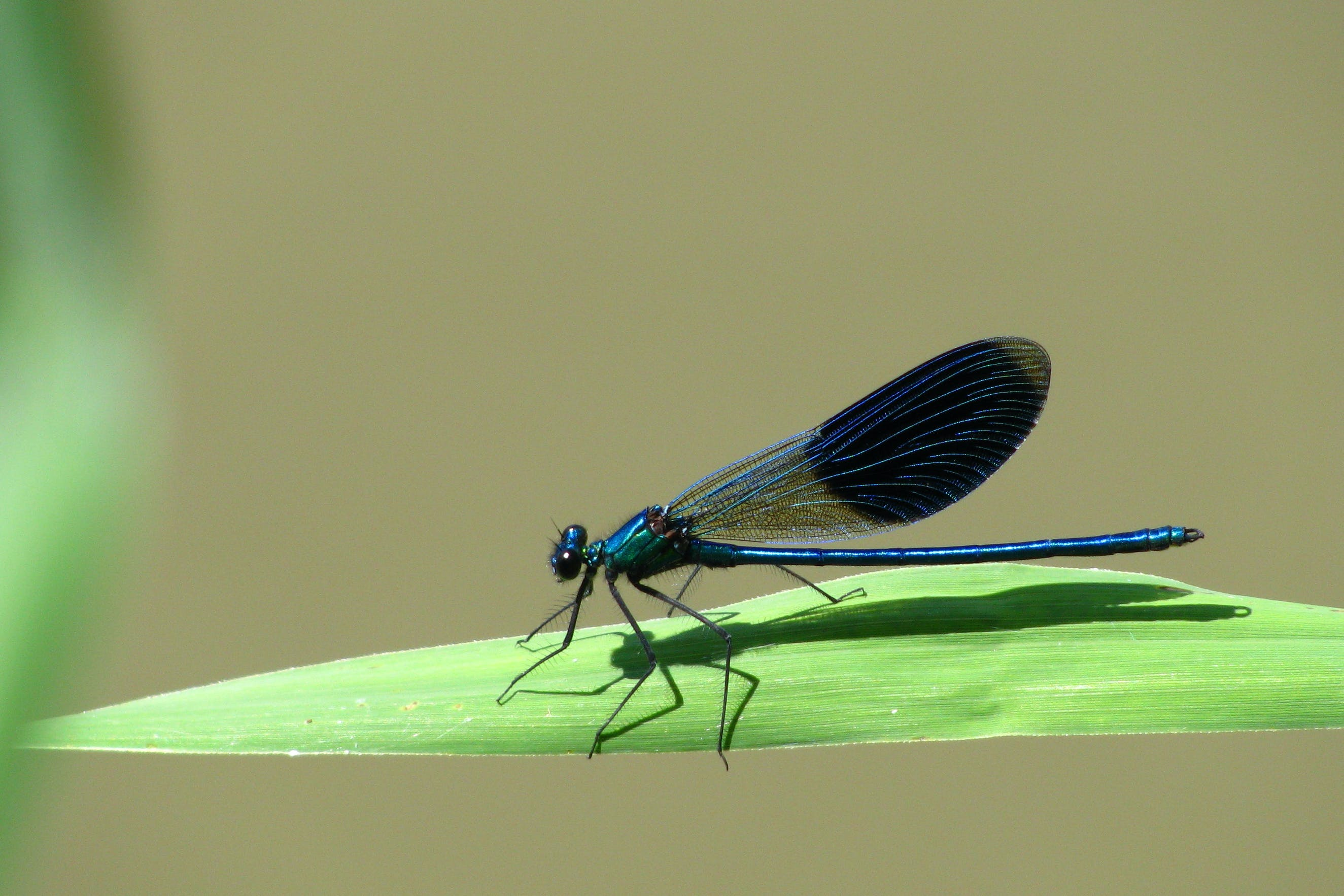 Free stock photo of bug, dragonfly, insect, macro