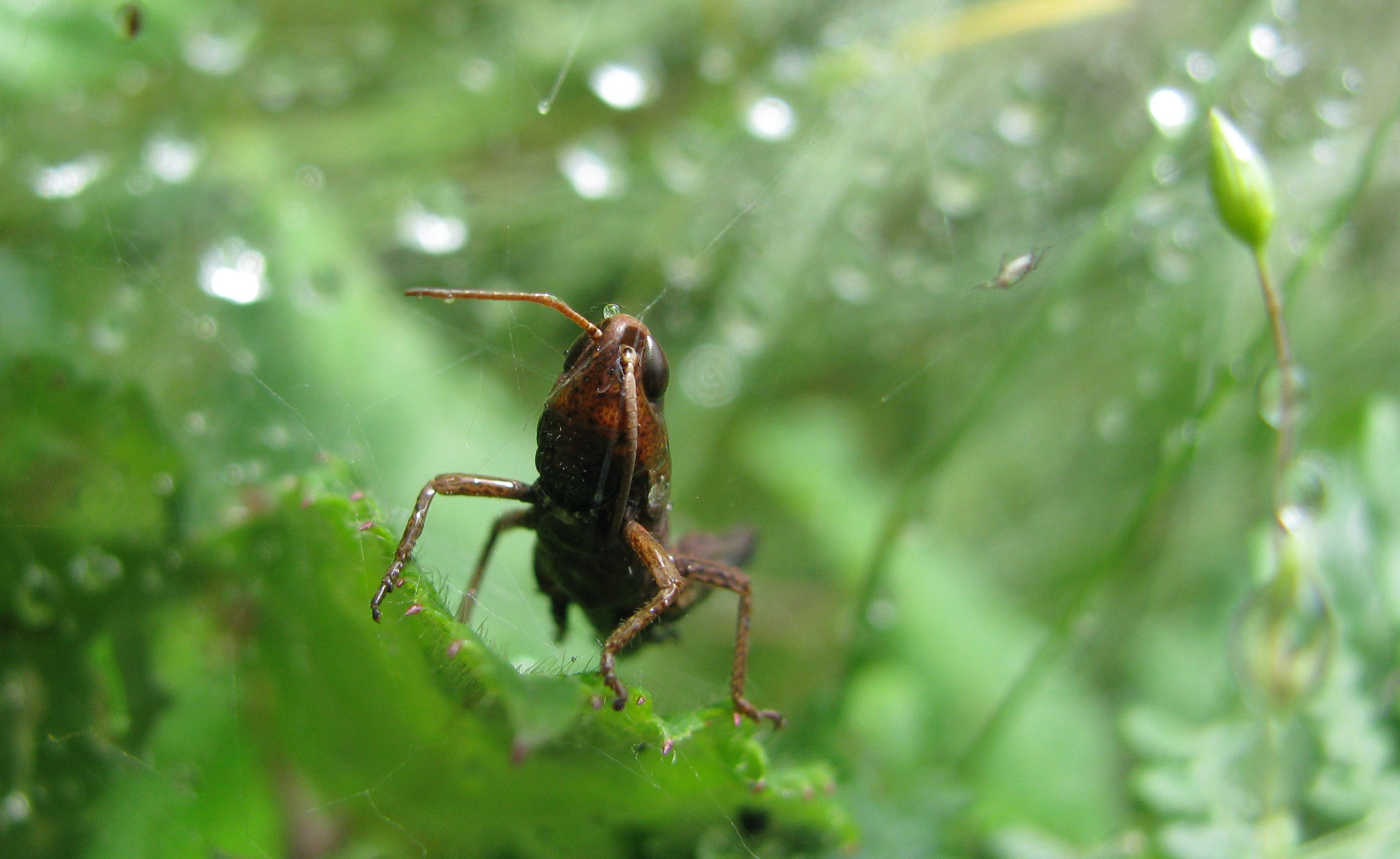 Free stock photo of bug, insect, nature, rain