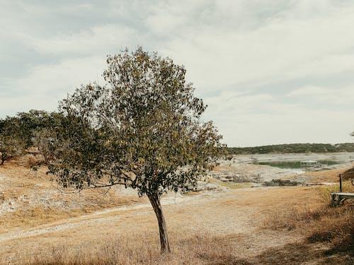 Green Tree on Brown Field Near Body of Water