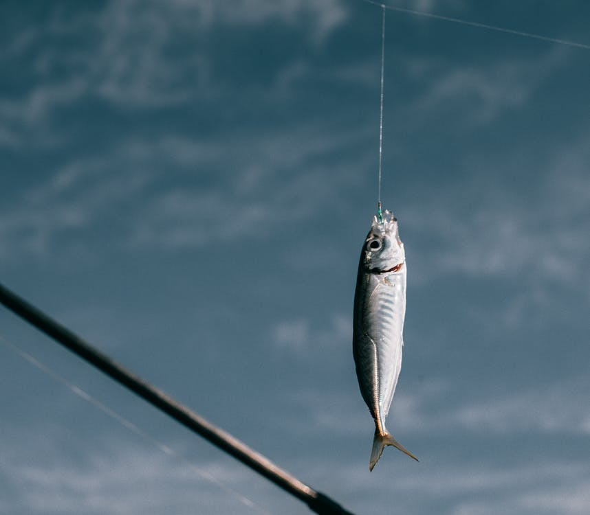 Fish hanging on hook against blurred background