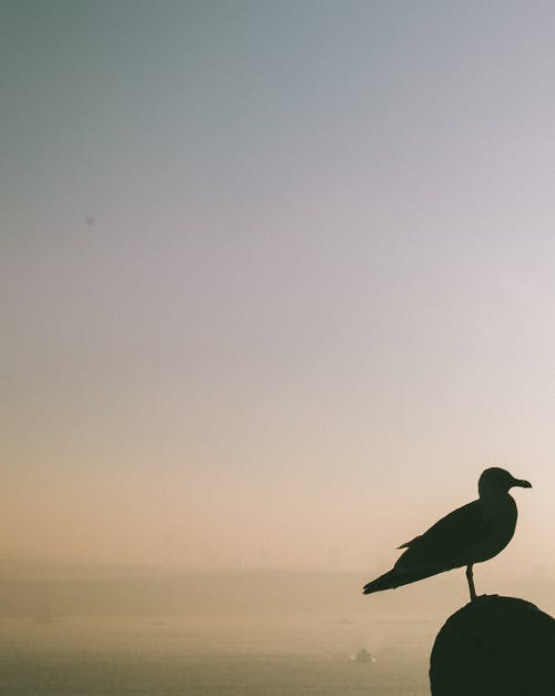 Silhouette of seagull on stone