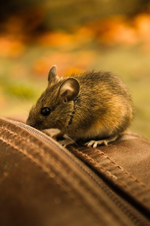 動物, 可愛, 可愛的 的 免費圖庫相片