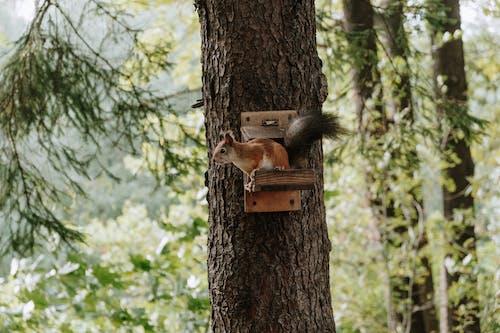 棕色松鼠在棕色的樹幹上