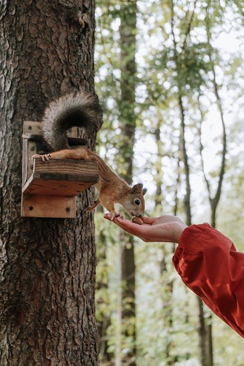 棕色松鼠在棕色木製禽舍