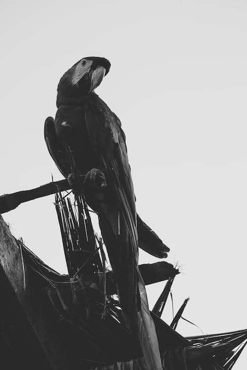 Free stock photo of amazon parrot, ecuador parrot, parrot