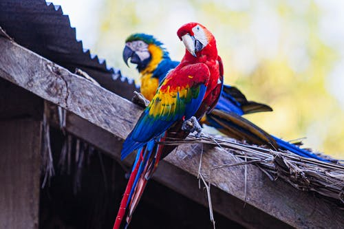 Red Yellow Blue and Green Parrot on Brown Wooden Post