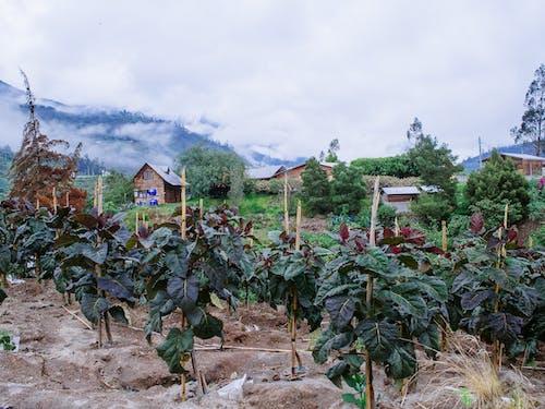 Free stock photo of andes mountain farm, ecuador farm, ecuador village