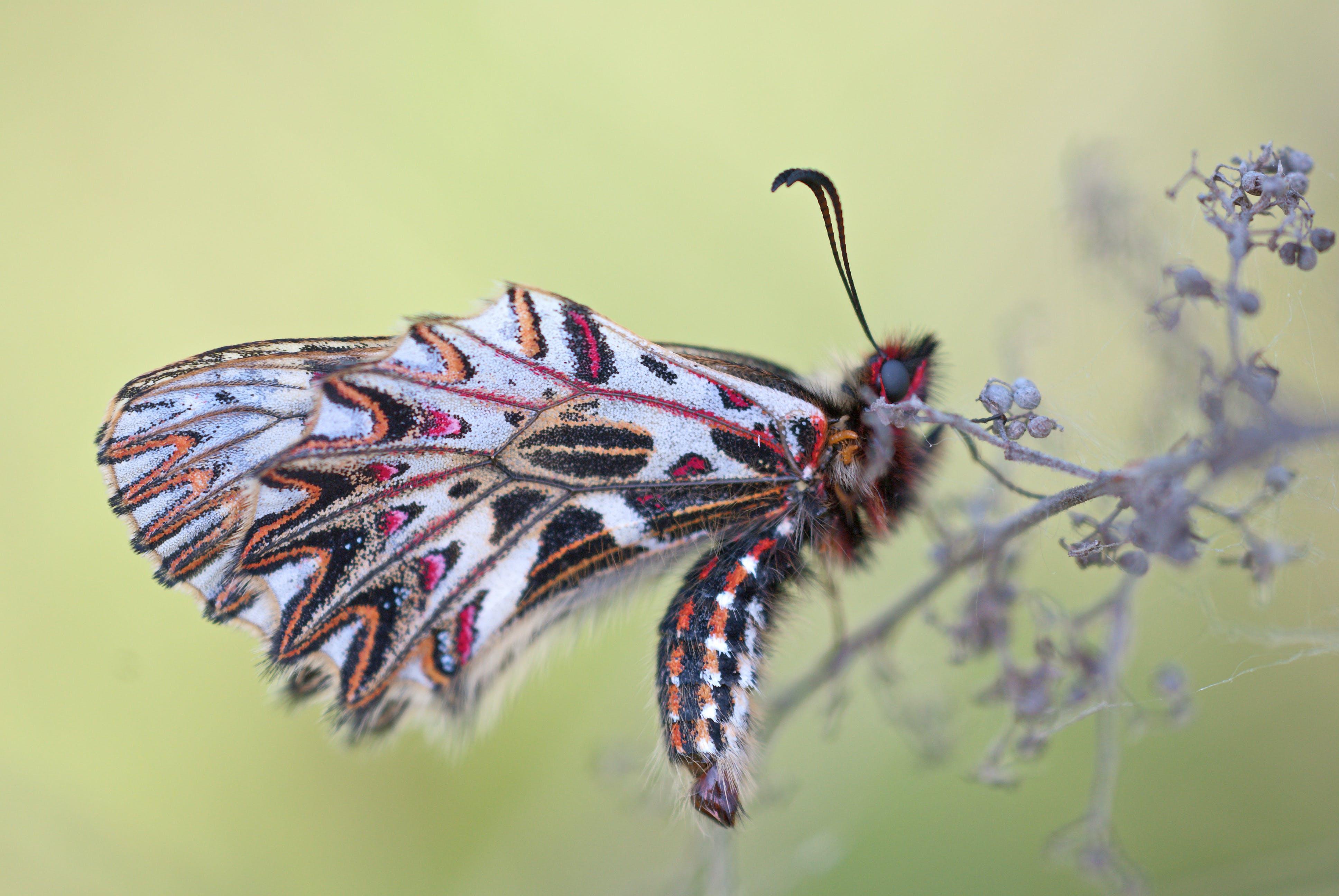 Foto d'estoc gratuïta de ales, animal, bitxo, colorit