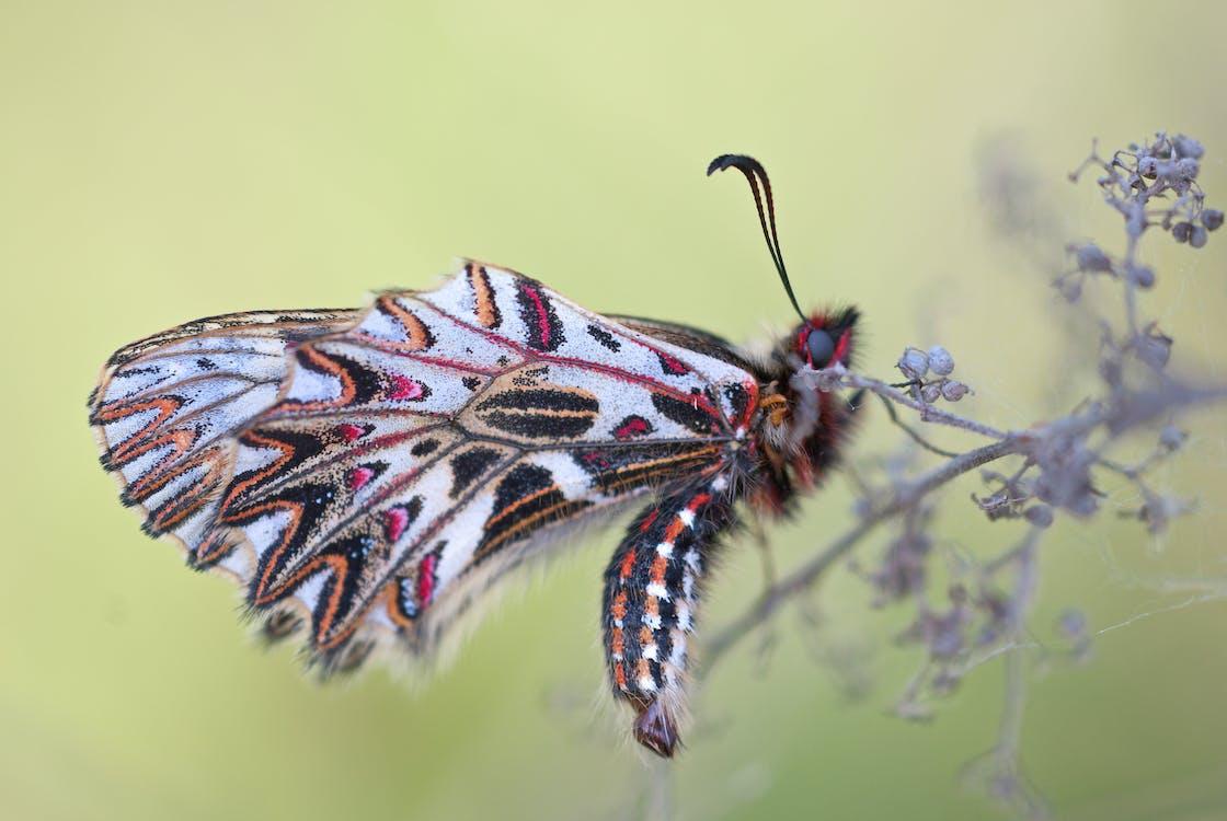macro, εθνικό πάρκο, έντομο