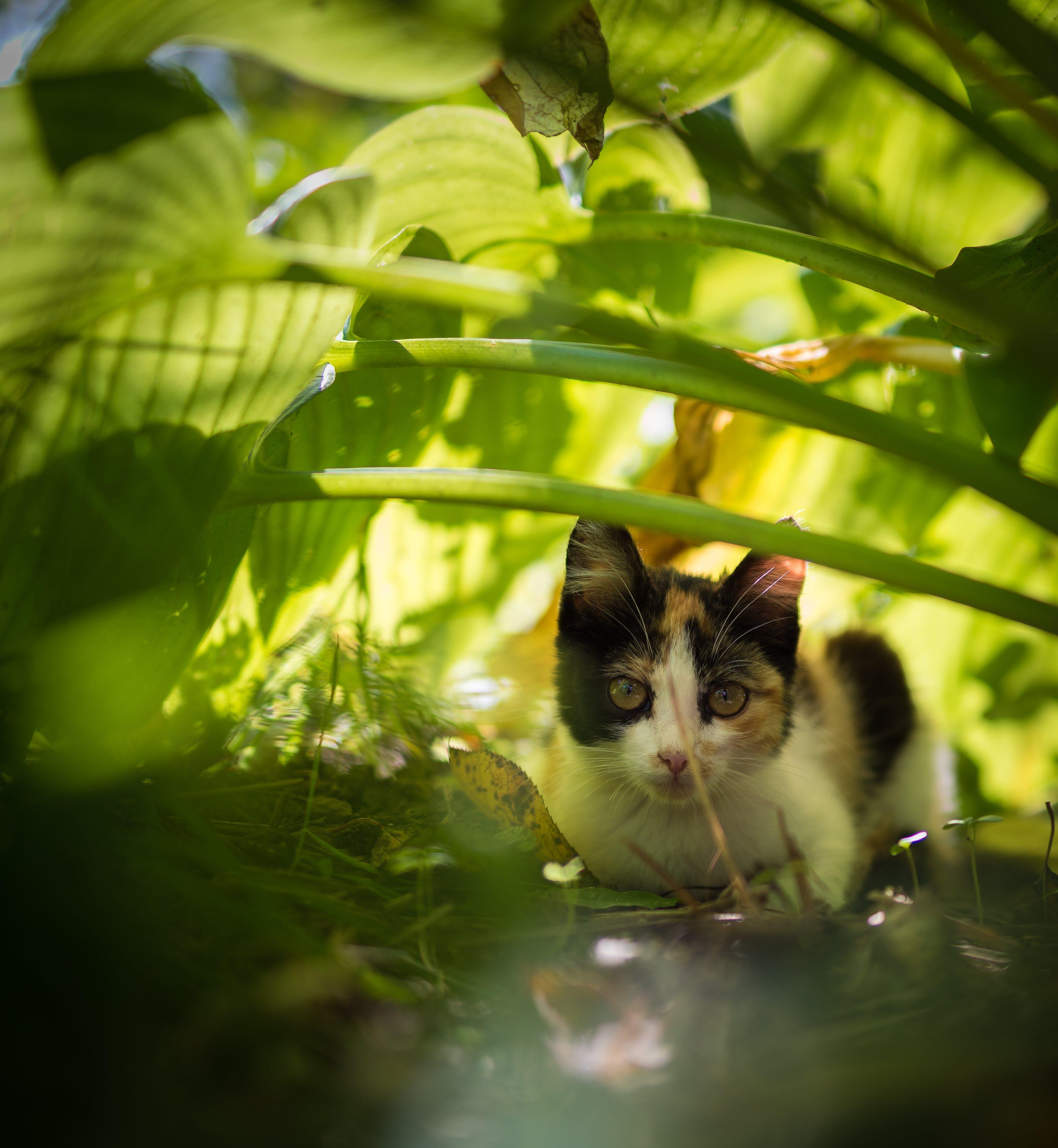Free stock photo of cat, cats, feline, green