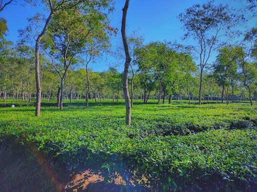 Fotos de stock gratuitas de árboles verdes, cielo azul claro, fondo abstracto, fondo de montaña