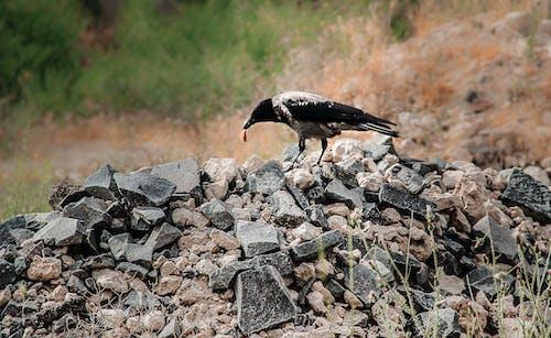 Free stock photo of bird, birding, birdphotography