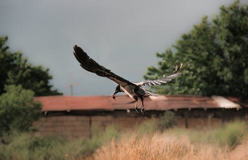 Free stock photo of bird, birds, birdsofinstagram