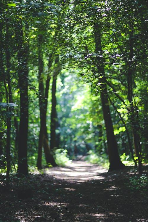 arboles, bosque, camino