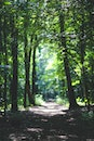 forest, trees, path