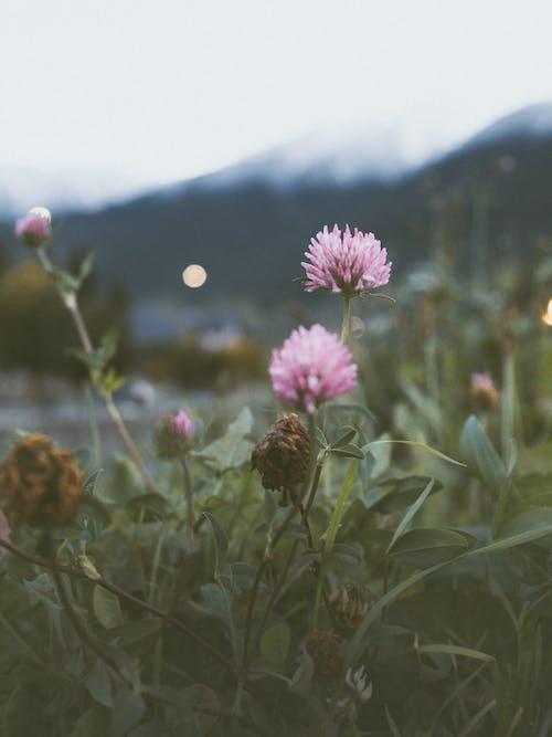 Foto stok gratis , alam, alami