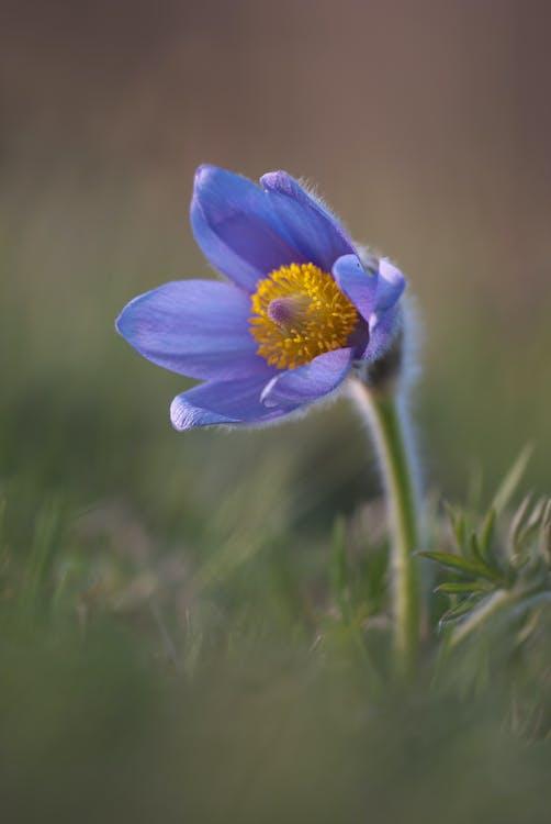 azul, botánica, césped
