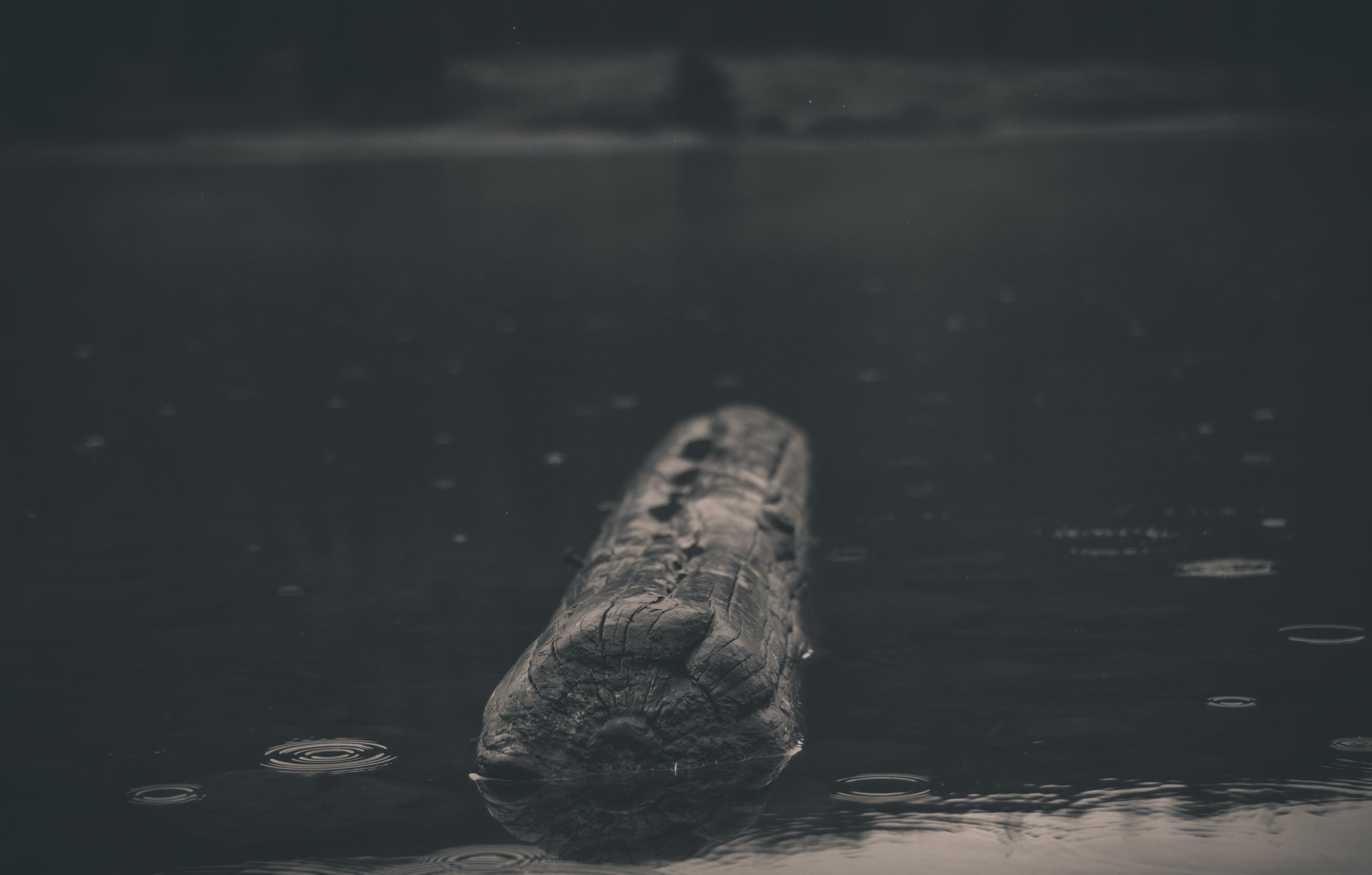 Free stock photo of lake, log, rain