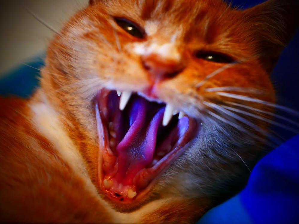 Free stock photo of 4k, cat, close