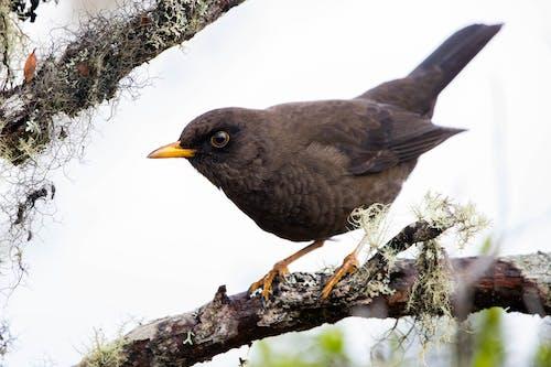 冬季, 動物, 喙 的 免費圖庫相片