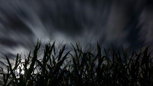 Foto d'estoc gratuïta de camp, exposició llarga, nit, núvols