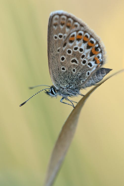 Бесплатное стоковое фото с бабочка, животное, крупный план, максросъемка