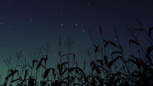 Foto d'estoc gratuïta de camps, degradat, estrelles, nit