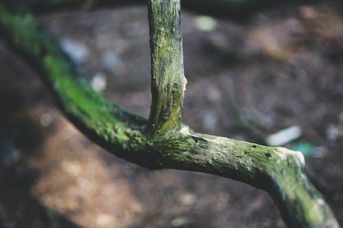Základová fotografie zdarma na téma barva, déšť, dřevo, flóra