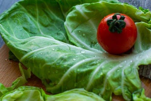 Foto stok gratis agrikultura, air, alami