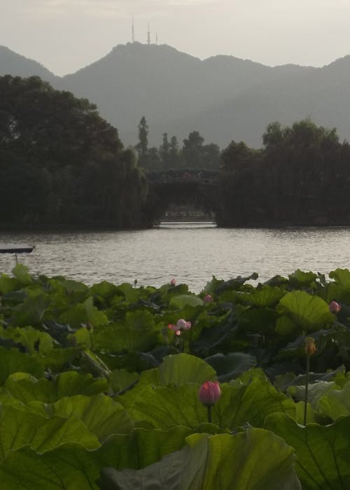 Free stock photo of bridge, china, huangzhou