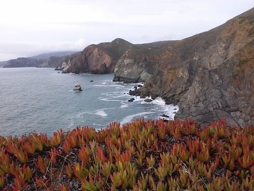 Free stock photo of coast, marin headlands, rocky