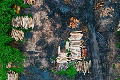 Aerial view of log trunks piles recently cut stored on dirty wet ground between rural road and green forest trees in daylight
