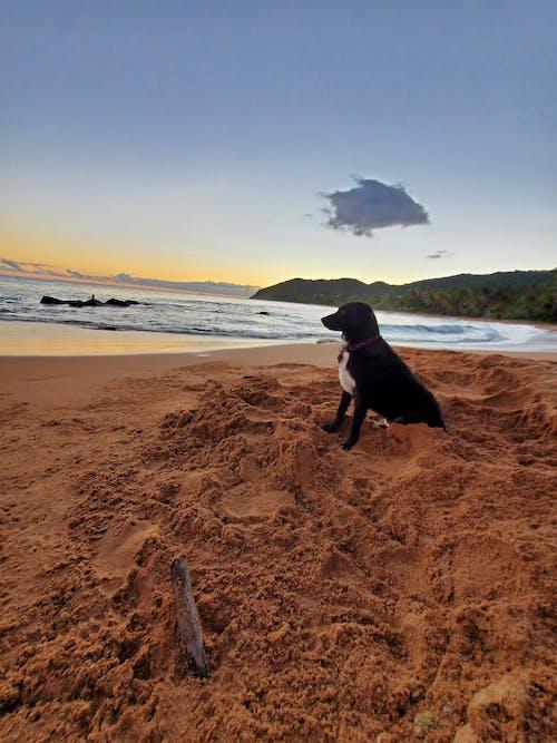 Free stock photo of dog beach
