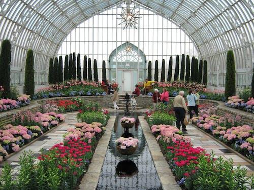 Free stock photo of flowers, greenhouse, minnesota