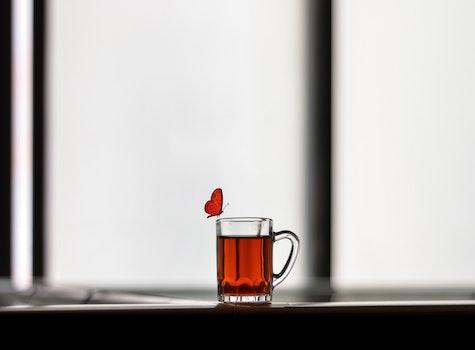 Free stock photo of mug, drink, animal, glass