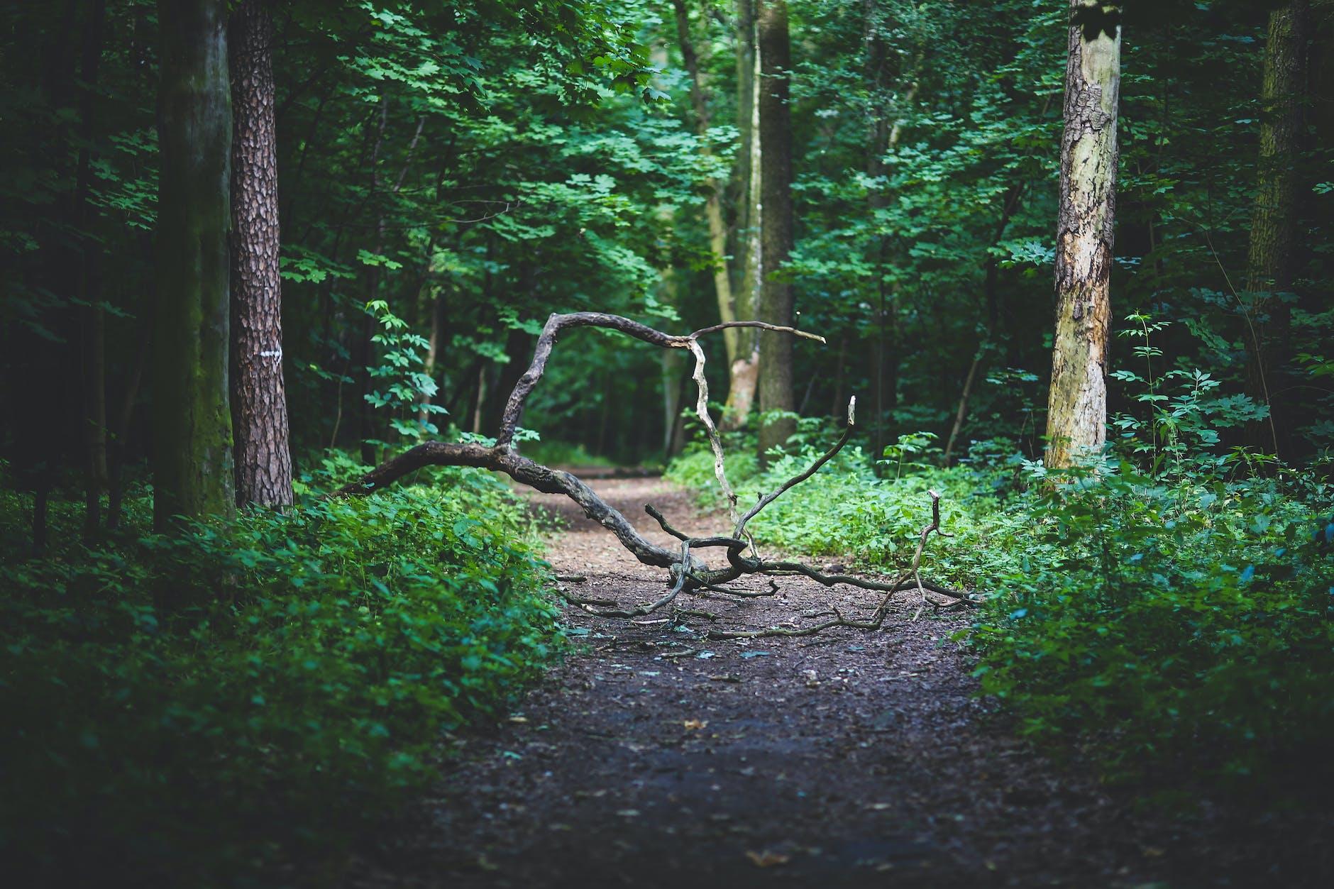 [圖︰ wood-nature-forest-path.jpg?auto=compres...=650&w=940]