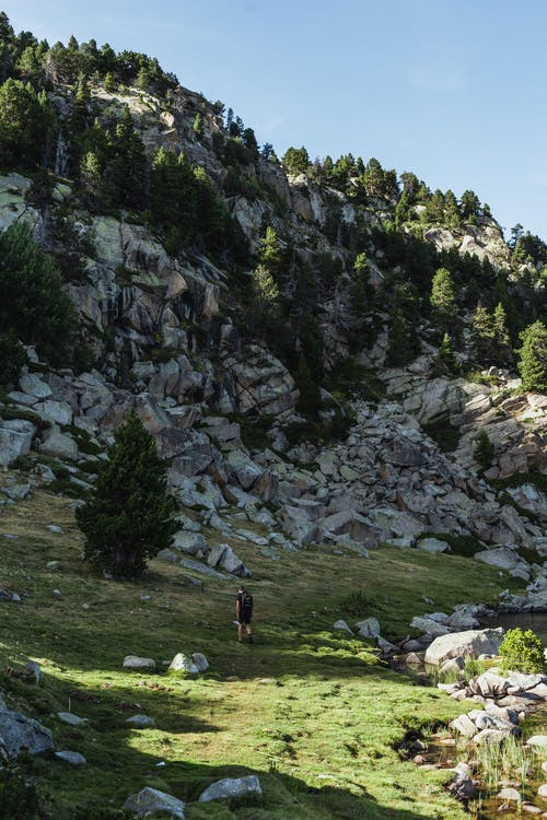 Back view of unrecognizable traveler walking on grassy slope near rough rocky mountain with lush coniferous trees during hiking trip against cloudless blue sky